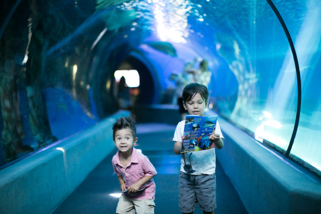 things to do for kids in maui