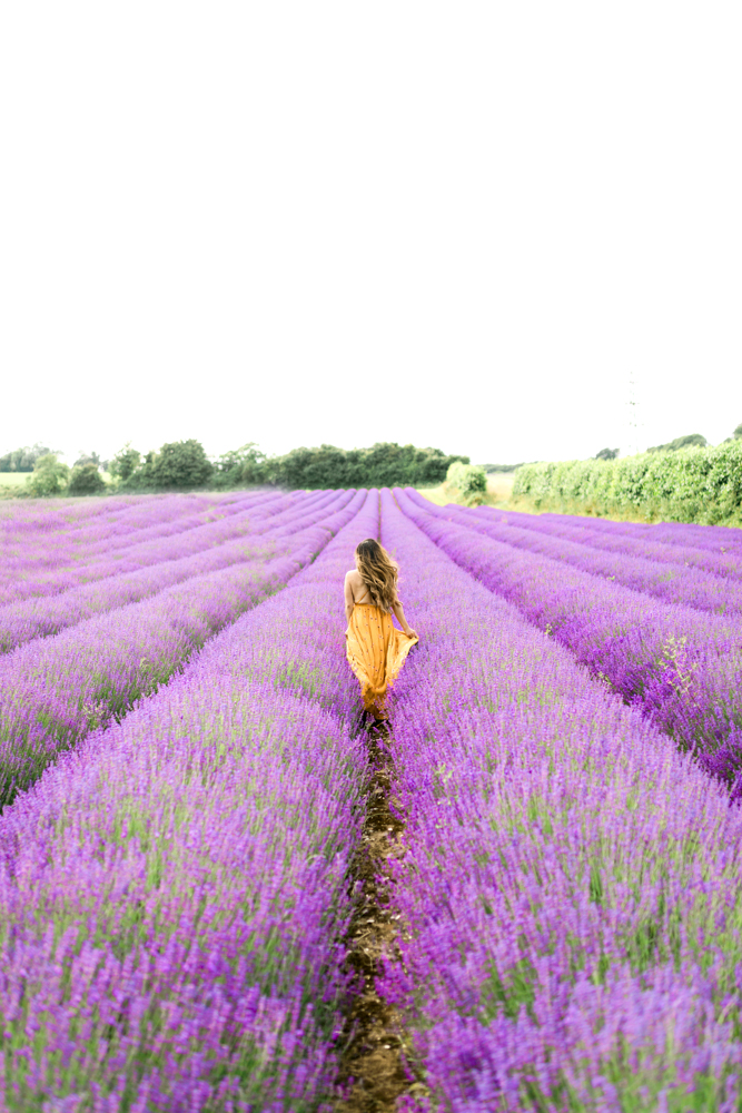 lavender field farm London