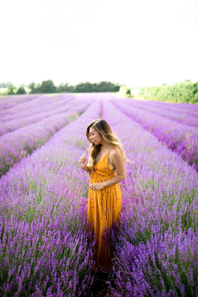 lavender farm in London